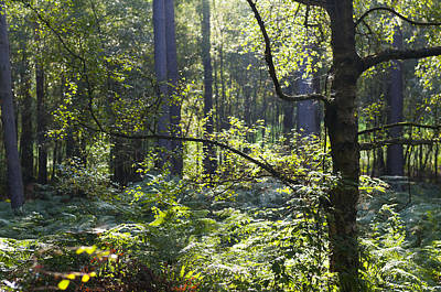 Photograph - Aspley Woods by David Isaacson