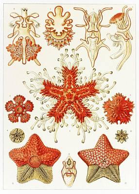 Asteroidea Organisms, Artwork Art Print by Mehau Kulyk