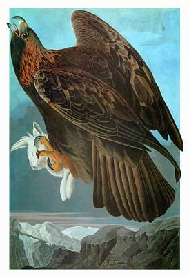 Lagomorphs Painting - Audubon Eagle by Granger