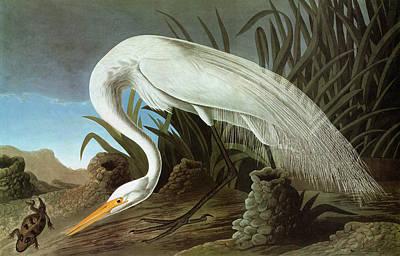 Audubon Egret Art Print