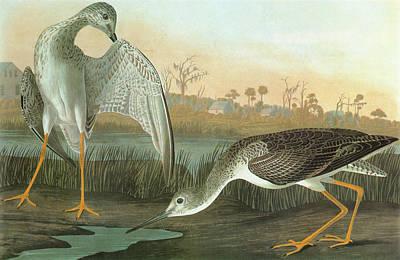 Yellow Beak Painting - Audubon Yellowlegs by Granger