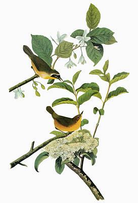 Yellow Beak Painting - Audubon Yellowthroat by Granger