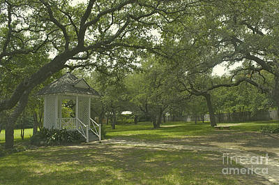 Photograph - Austin Texas Southern Garden - Luther Fine Art by Luther Fine Art