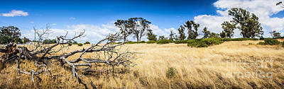 Australia Summer Landscape Of Rural Tasmania Print by Jorgo Photography - Wall Art Gallery