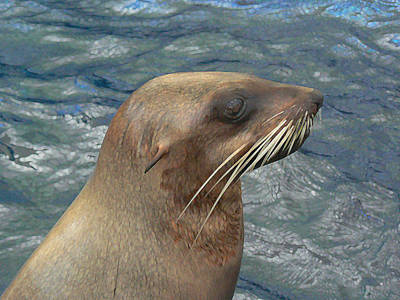 Photograph - Australian Fur Seal by Margaret Saheed