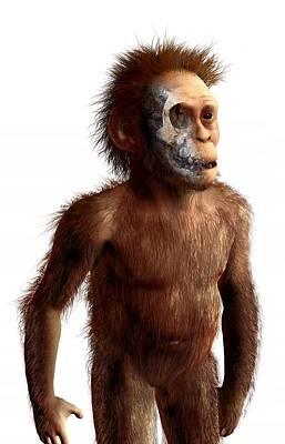 Australopithecus Afarensis, Artwork Art Print by Science Photo Library