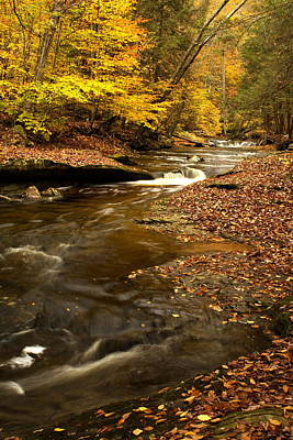 Tree Roots Photograph - Autumn And Creek by Amanda Kiplinger