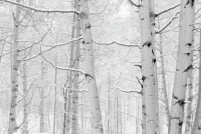 Thawing Photograph - Autumn Aspens With Snow, Colorado, Usa by Panoramic Images