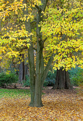 Photograph - Autumn At The Aboretum by Gary Slawsky