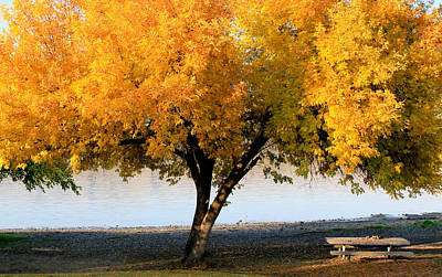 Photograph - Autumn At The River by Athena Mckinzie