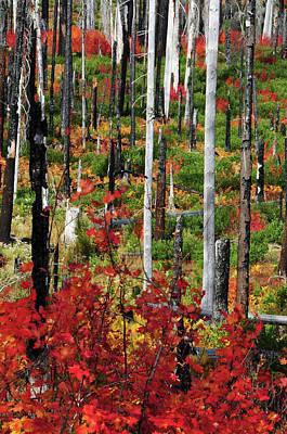 Charred Wall Art - Photograph - Autumn At The Santiam Pass, Oregon, Usa by Michel Hersen