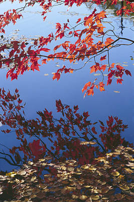Artwork Photograph - Autumn Blaze by Bruce Thompson