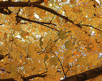 Photograph - Autumn Canopy  by Margie Avellino
