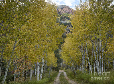 Photograph - Autumn Drive by Idaho Scenic Images Linda Lantzy