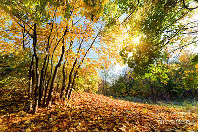 Sunbeam Photograph - Autumn Fall Landscape In Forest by Michal Bednarek
