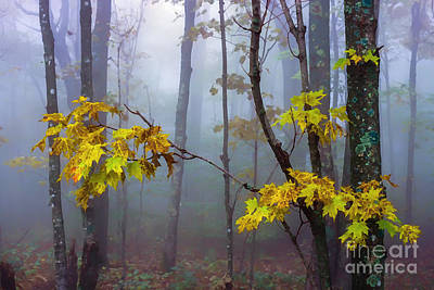Fallen Leaf Digital Art - Autumn Fog Monongahela National Forest by Thomas R Fletcher