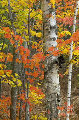 Photograph - Autumn Forest by John Shaw