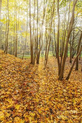 Autumn Forest Park Art Print by Aleksey Tugolukov