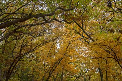Photograph - Autumn Forest by Ryan Heffron