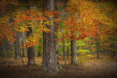 Photograph - Autumn Forest Scene by Randall Nyhof