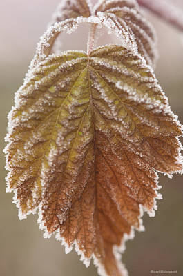 Photograph - Autumn Frost by Miguel Winterpacht