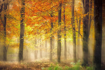 Autumn Gold Print by Ian Hufton