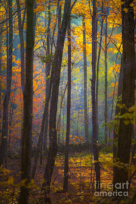 Sun Rays Photograph - Autumn In Connecticut by Diane Diederich