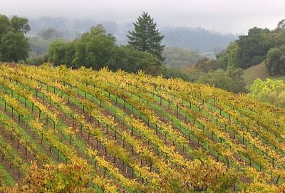 Wine Country Card Painting - Autumn In Wine Country by Sandra Ramsey