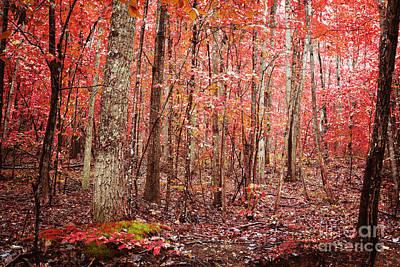 Autumn Landscape Art Print by Kim Fearheiley