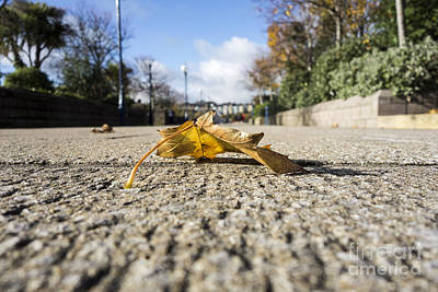 Photograph - Autumn Leaf On Pathway by Jim Orr