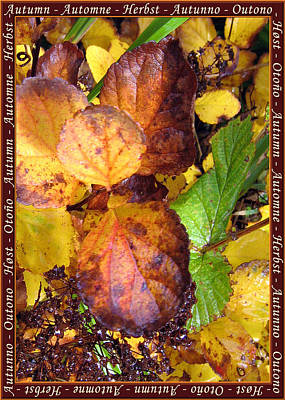 Photograph - Autumn Leaves 2 by Helene U Taylor