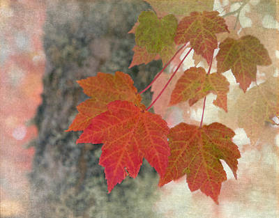 Red Leaves Photograph - Autumn Leaves by Angie Vogel