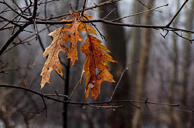 Photograph - Autumn Leaves by Celso Bressan