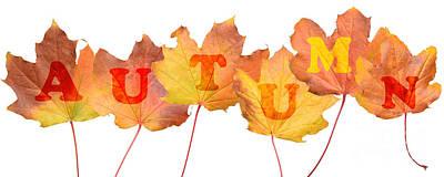 Autumn Leaves Art Print by Amanda Elwell