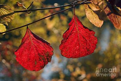 Photograph - Autumn Leaves by Dr Juerg Alean