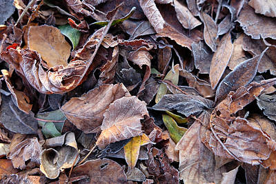 Photograph - Autumn Leaves by Mark Severn