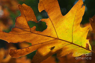 Photograph - Autumn Leaves by Nick  Biemans