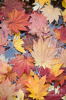 Photograph - Autumn Leaves by Sean Bagshaw
