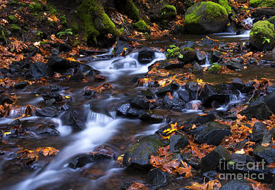 Maple Photograph - Autumn Meander by Mike Dawson
