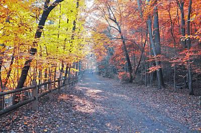 Autumn On Forbidden Drive Art Print