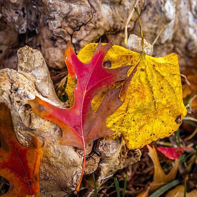 Photograph - Autumn Pile by Melinda Ledsome
