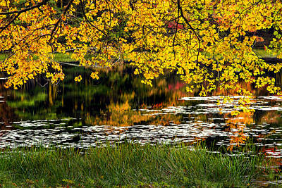 Autumn Pond 2013 Art Print by Bill Wakeley