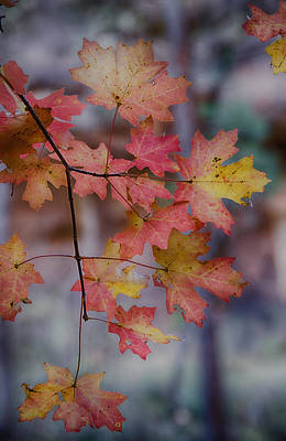 Photograph - Autumn Splendor  by Saija  Lehtonen