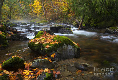 Maple Season Photograph - Autumn Stream by Mike Dawson