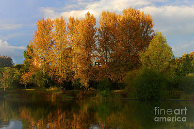 Photograph - Autumn Trees by Jeremy Hayden