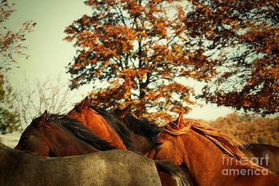 Photograph - Autumn Wild Horses by Dimitar Hristov