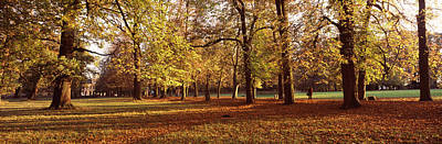 Fallen Leaf Photograph - Autumnal Trees In A Park, Ludwigsburg by Panoramic Images