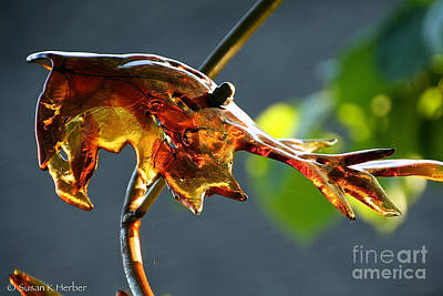 Photograph - Autumn's Glass Palate by Susan Herber