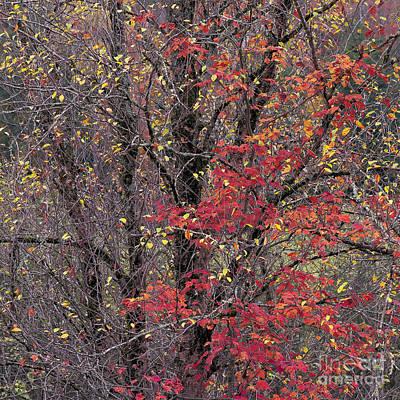 Autumn's Palette Art Print by Alan L Graham