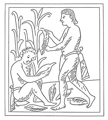 Cornfield Drawing - Aztec Farmers by Granger